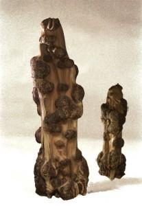 sculpture bois acacia